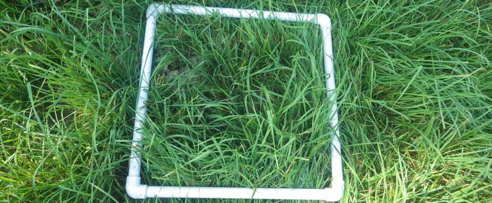 pasture evaluation grid