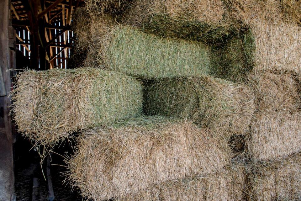 Hay Testing Provides Answers